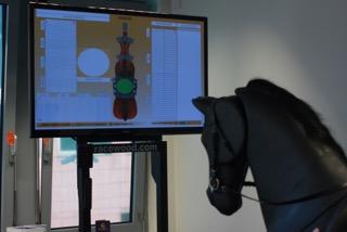 Monitor zur Kontrolle des Training auf dem Reitsimulator